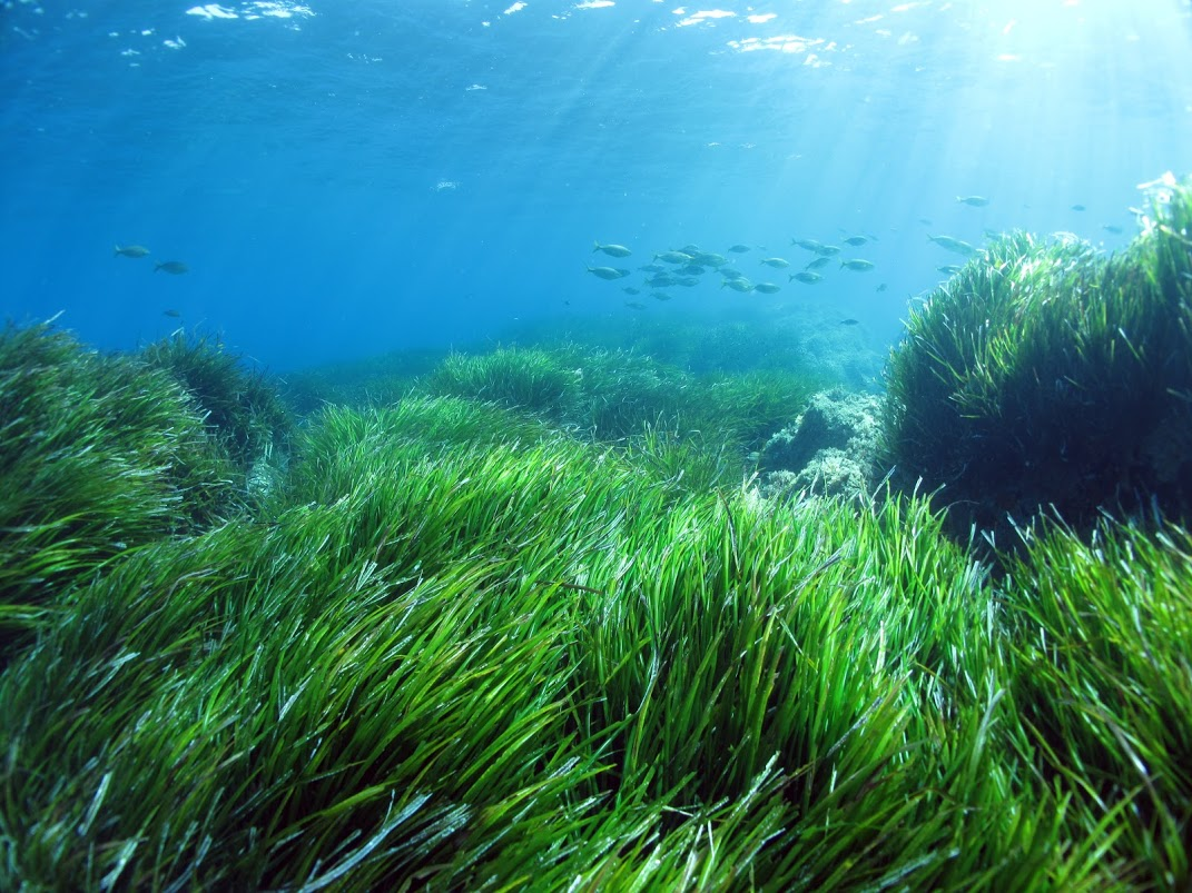 Energia solare dalle alghe